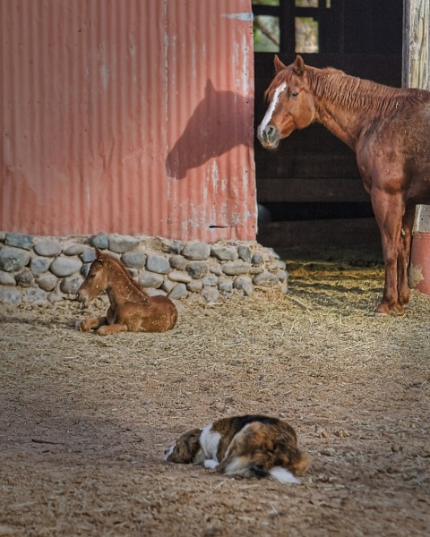 Horse, Foal, and dog image - Earth Release Animal Clearings